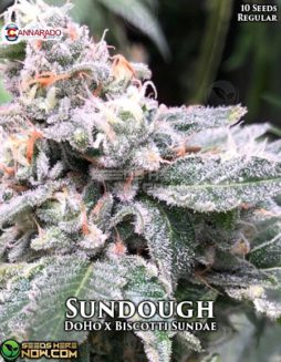 cannarado-genetics-sundough