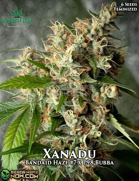 katsu-seeds-xanadu