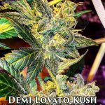 Autoflowering_feminized_seeds