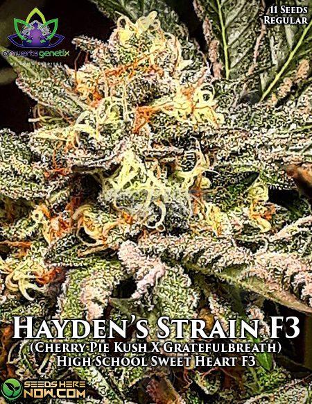 Marijuana_seed_banks