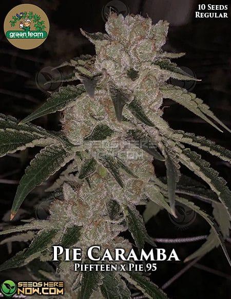 green-team-genetics-pie-caramba