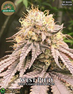 green-team-genetics-west-pied