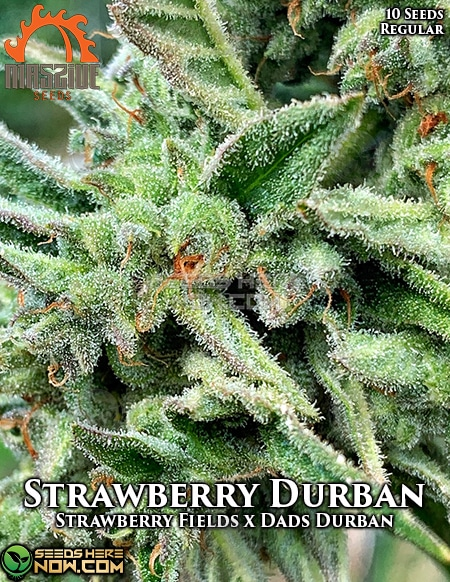 massive-seeds-strawberry-durban