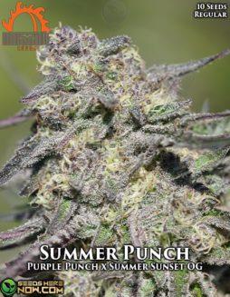 massive-seeds-summer-punch