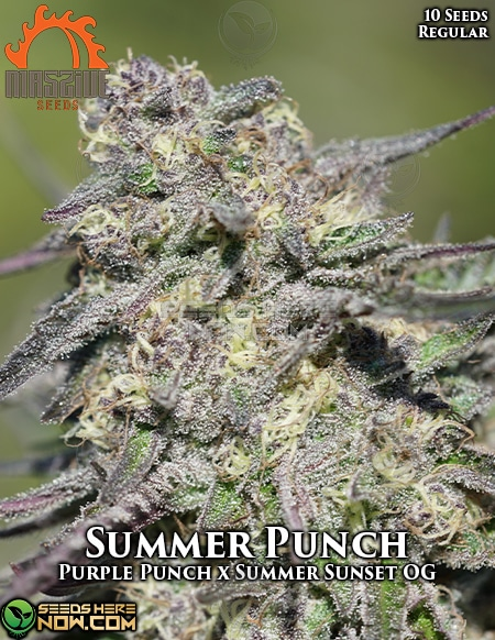 massive-seeds-summer-punch