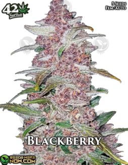 fast-buds-blackberry