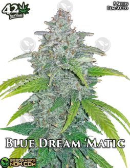 fast-buds-blue-dream-matic