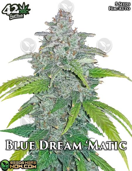 fast-buds-blue-dream-matic
