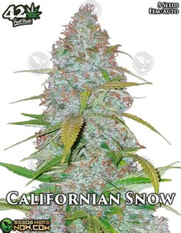 fast-buds-californian-snow