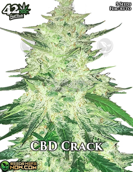 fast-buds-cbd-crack