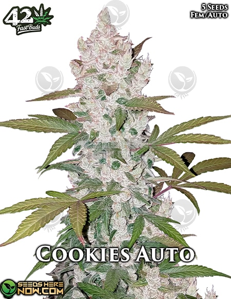 fast-buds-cookies-auto