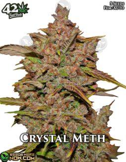 fast-buds-crystal-meth