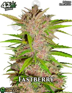 fast-buds-fastberry