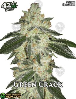 fast-buds-green-crack