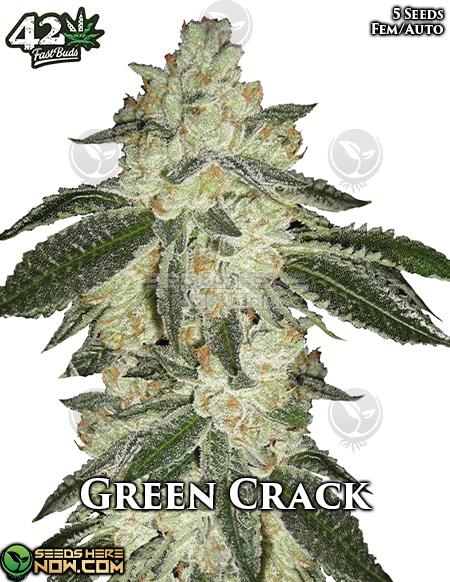 fast-buds-green-crack