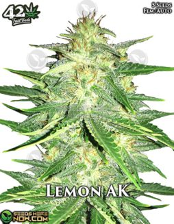 fast-buds-lemon-ak