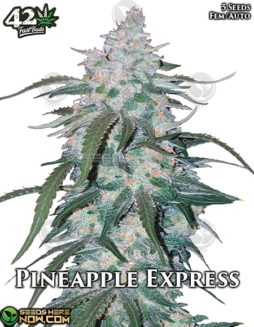 fast-buds-pineapple-express