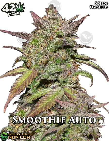 fast-buds-smoothie-auto