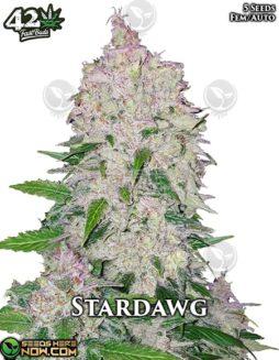 fast-buds-stardawg