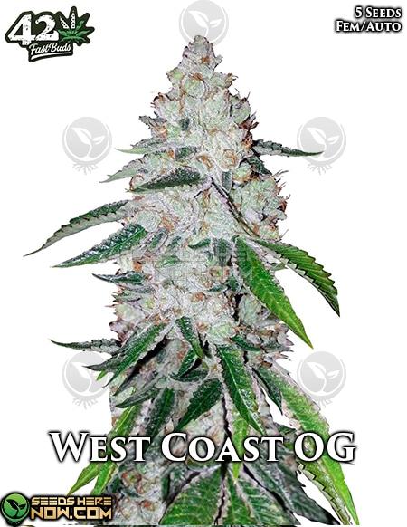fast-buds-west-coast-og