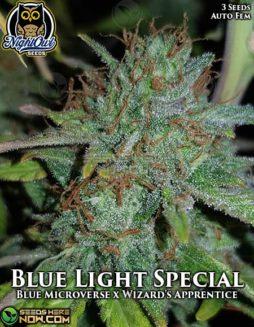 night-owl-seeds-blue-light-special