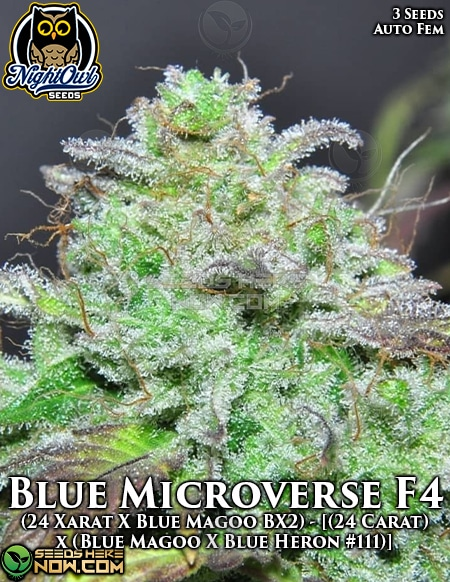 night-owl-seeds-blue-microverse-f4
