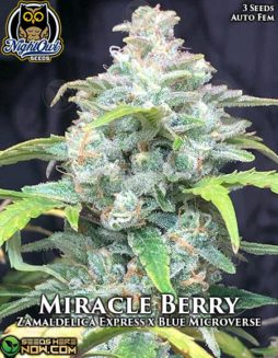 night-owl-seeds-miracle-berry