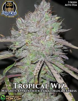 night-owl-seeds-tropical-wiz
