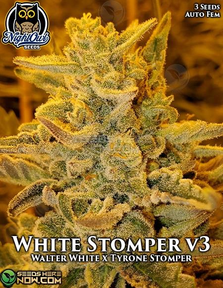 night-owl-seeds-white-stomper-v3
