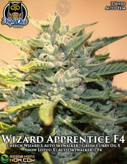 night-owl-seeds-wizard-apprentice-f4