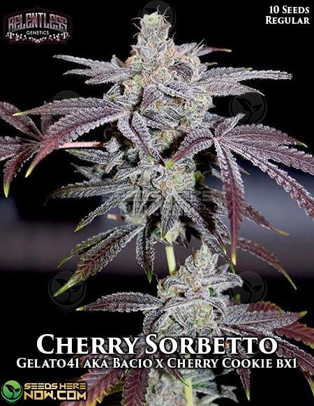 relentless-genetics-cherry-sorbetto
