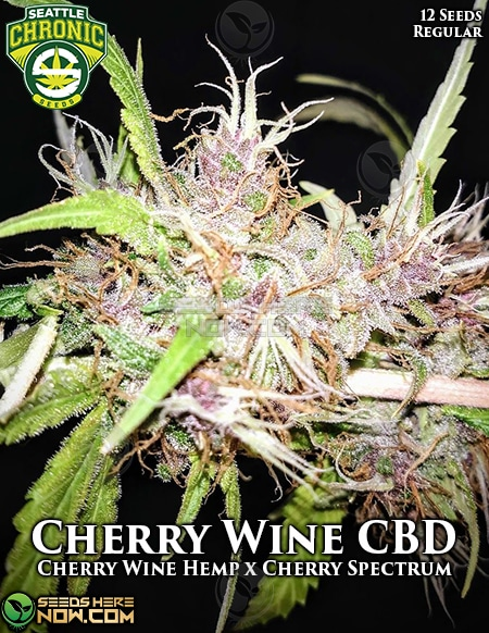 seattle-chronic-seeds-cherry-wine-cbd