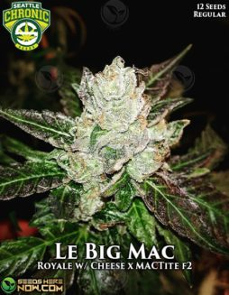 seattle-chronic-seeds-le-big-mac