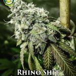 seattle-chronic-seeds-rhino-shit