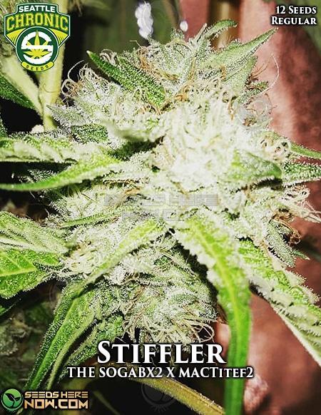 seattle-chronic-seeds-stiffler