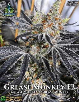 exotic-genetix-grease-monkey-f2