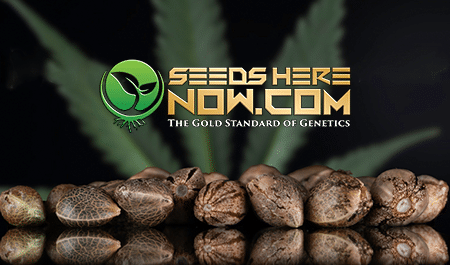 Hemp Seeds: What Is The Difference Between Regular, Feminized & Auto-flowering?