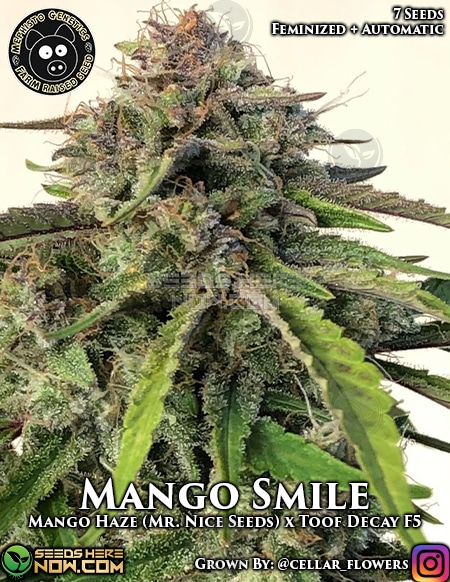 Mephisto Genetics - Mango Smile 7 Pack Feminized » Seeds ...